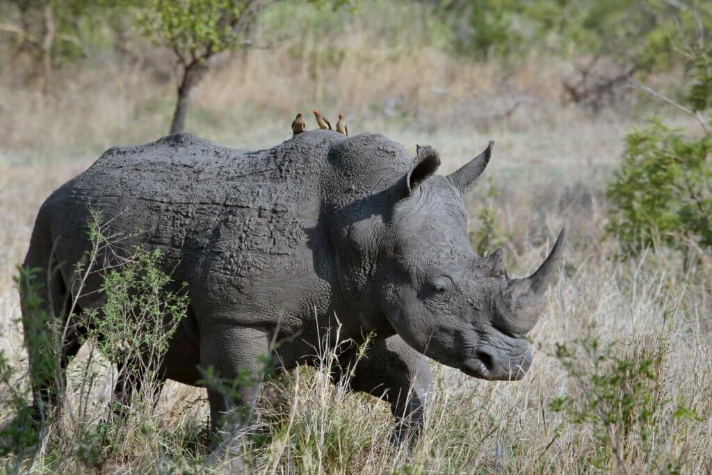 If saving the rhinoceros is on your list of important causes, that's one more reason why making money is a good thing.